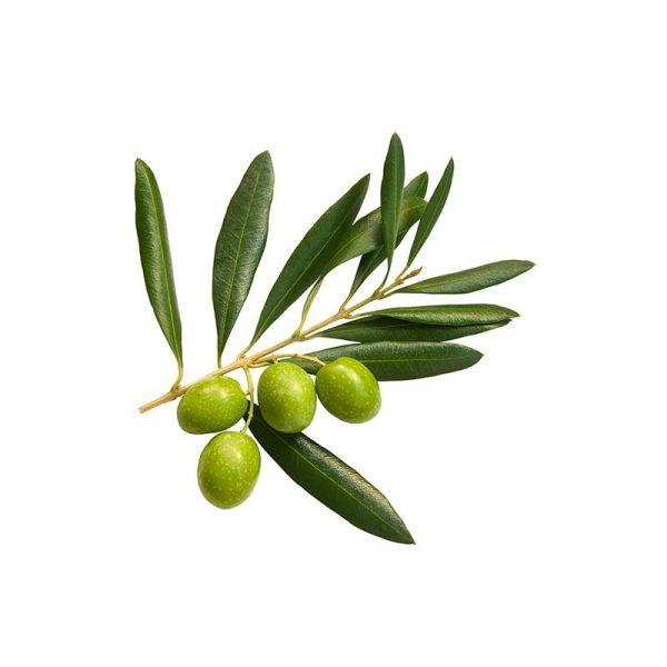 Olive 3
